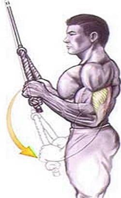 treino corda triceps puxador