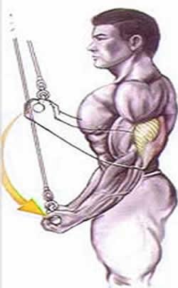 treino invertido triceps puxador