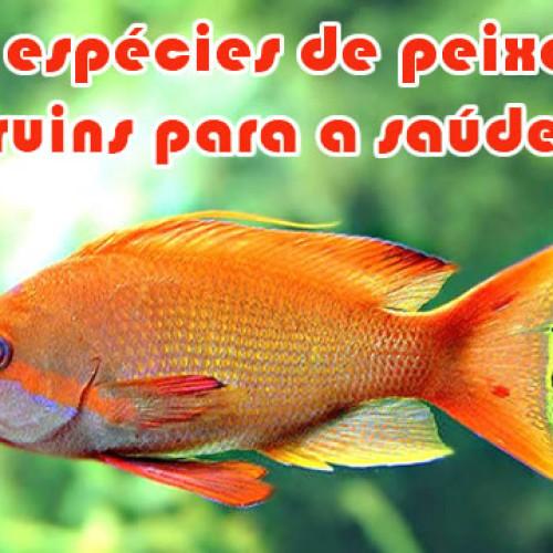 Conheça 4 espécies de peixes que não devem ser consumidos