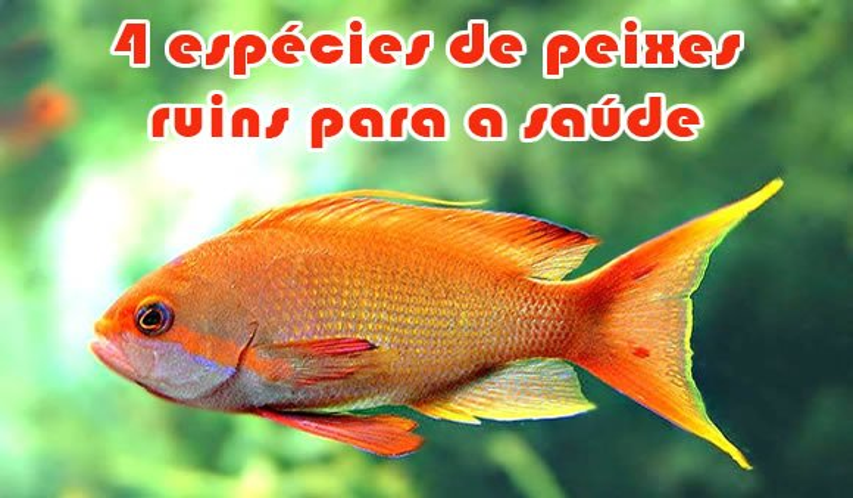 peixes proibidos comer