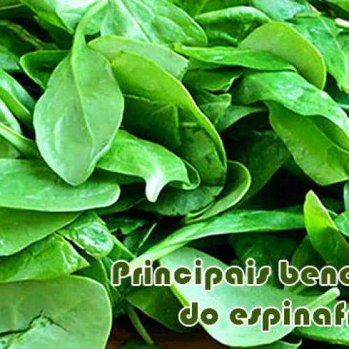 Conheça os principais benefícios do Espinafre