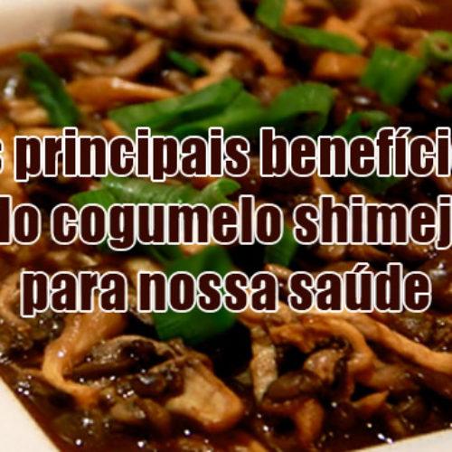 8 benefícios do shimeji cogumelo para sua saúde