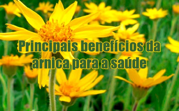 beneficios arnica saude
