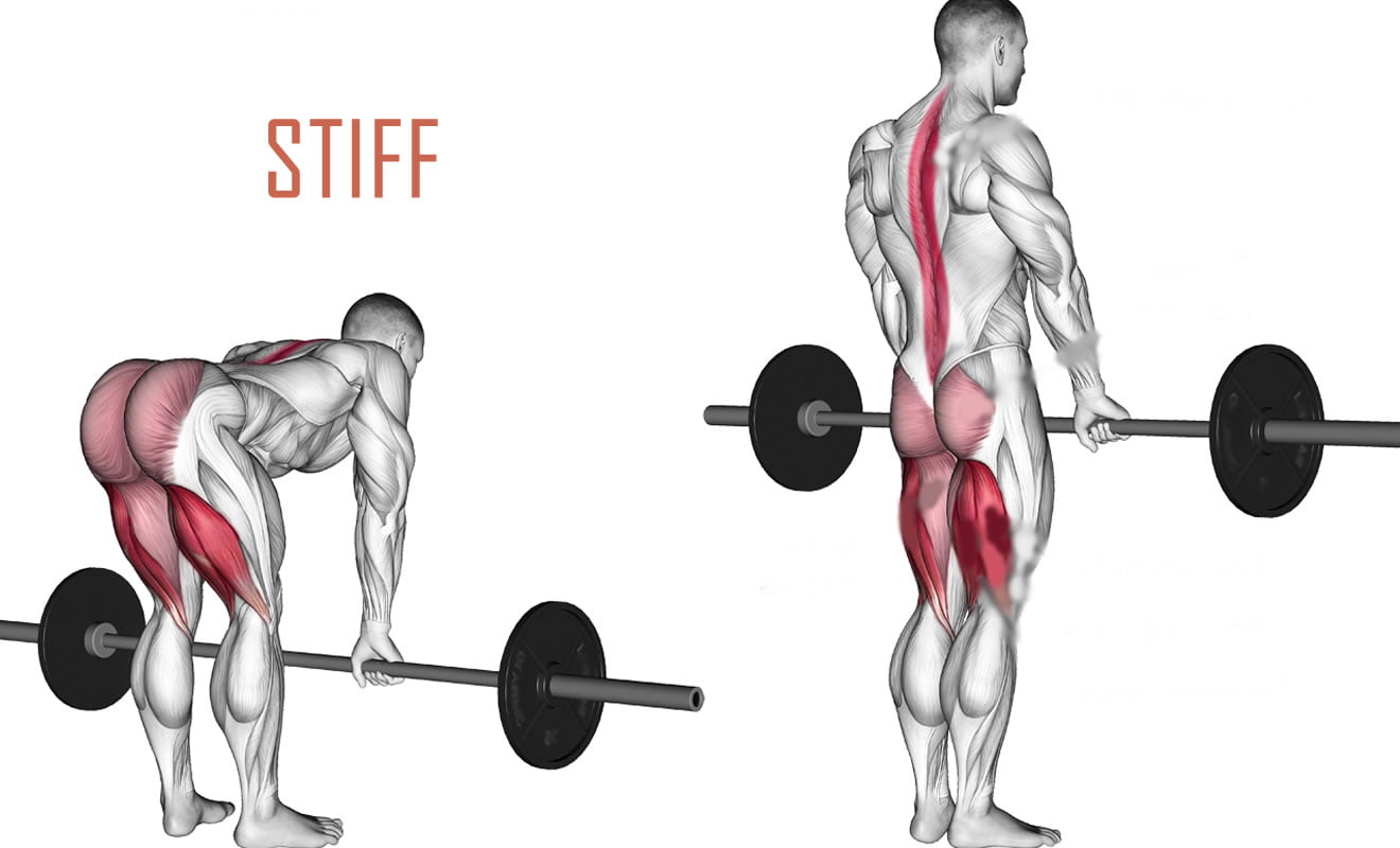 movimento exercicio stiff