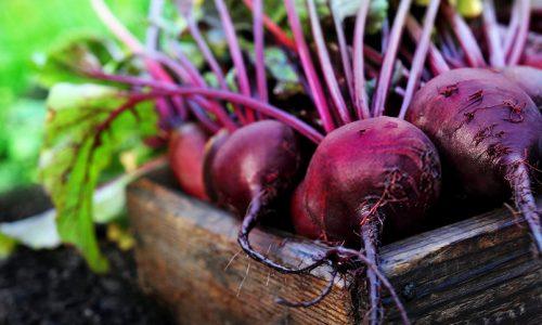 Beterraba: Dicas e benefícios deste alimento excelente para a saúde